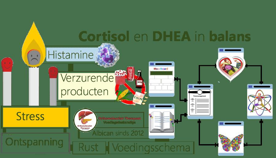 Cortisol, DHEA, balans, stress, histamine, ontspanning, pre-diabetes, timemanagement, speurtocht, dagboek, Cholesterol, Voeding